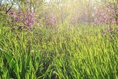 Struttura di erba, campo della foresta con alta erba densa e fiori Fotografia Stock