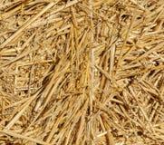 Struttura di fieno dorato al sole Fondo di riserva di fieno Fotografia Stock Libera da Diritti