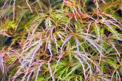 Struttura di Flora Leaves Fotografia Stock Libera da Diritti