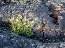 Struttura di flusso di lava Fotografia Stock Libera da Diritti