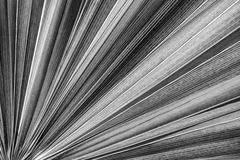 Struttura di foglia di palma Immagini Stock Libere da Diritti