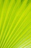 Struttura di foglia di palma verde per fondo Fotografia Stock Libera da Diritti
