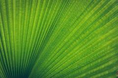 Struttura di foglia di palma Fotografie Stock