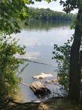 Struttura di galleggiamento della foresta Immagini Stock Libere da Diritti