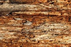 Struttura di granulo di legno Immagini Stock