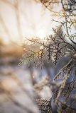 Struttura di inverno Alberi congelati Fotografie Stock Libere da Diritti