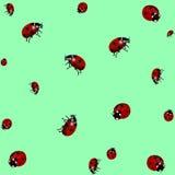 Struttura di Ladybird Progettazione realistica Illustrazione di vettore royalty illustrazione gratis