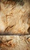 Struttura di lato della pelle del coniglio Fotografia Stock