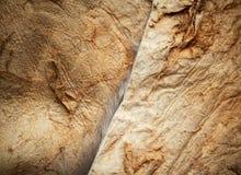 Struttura di lato della pelle del coniglio Immagini Stock