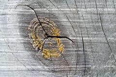Struttura di legno 1 del granulo Immagine Stock Libera da Diritti