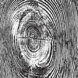 Struttura di legno afflitta del nodo Immagine Stock