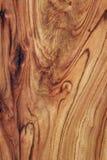 Struttura di legno: Alloro della canfora Fotografie Stock