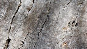 Struttura di legno antica Fotografie Stock Libere da Diritti