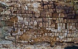 struttura di legno bruciata da fulmine. Immagini Stock