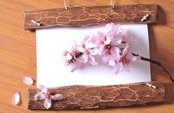 Struttura di legno con i fiori della molla Fotografie Stock