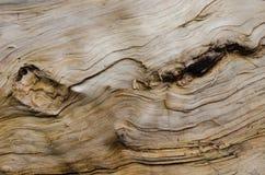 Struttura di legno con i knotholes Fotografie Stock