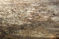 Struttura di legno con il modello naturale Fotografia Stock Libera da Diritti