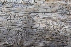 Struttura di legno con il modello naturale Fotografia Stock