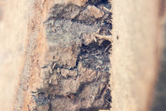 Struttura di legno con la corteccia fotografia stock