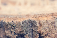 Struttura di legno con la corteccia Fotografie Stock