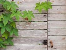 Struttura di legno con le foglie Fotografie Stock Libere da Diritti