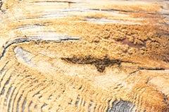 Struttura di legno con sfondo naturale Immagine Stock Libera da Diritti