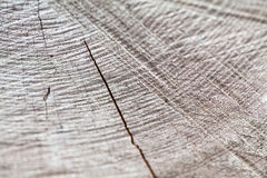 Struttura di legno dal pezzo molto vecchio e stagionato su legno Fotografia Stock
