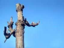 struttura di legno del bello albero stupefacente in cielo fotografie stock