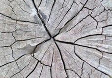 Struttura di legno del ceppo Immagini Stock