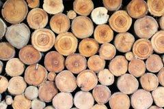 Struttura di legno del ceppo Fotografia Stock