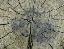 Struttura di legno del ceppo Immagine Stock Libera da Diritti
