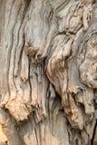 Struttura di legno del gambo Fotografia Stock Libera da Diritti