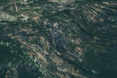 Struttura di legno del primo piano del tronco di albero Struttura e fondo di legno approssimativi per progettazione Vecchio fondo Immagine Stock
