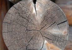 Struttura di legno del taglio Immagini Stock Libere da Diritti