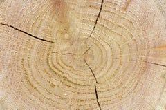 Struttura di legno del taglio del primo piano Fotografia Stock Libera da Diritti