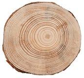 Struttura di legno del taglio dell'incrocio del tronco di albero immagine stock