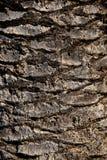 Struttura di legno del tronco della palma immagini stock libere da diritti