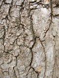 Struttura di legno dell'albero di corteccia. immagine stock