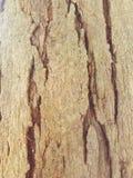 Struttura di legno della corteccia Fotografia Stock