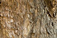 Struttura di legno della corteccia Fotografie Stock