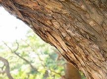 Struttura di legno della corteccia Fotografie Stock Libere da Diritti