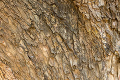 Struttura di legno della corteccia Immagini Stock Libere da Diritti