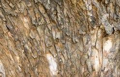 Struttura di legno della corteccia Immagine Stock Libera da Diritti