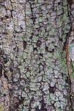 Struttura di legno della corteccia Fotografia Stock Libera da Diritti