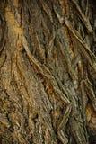 Struttura di legno della corteccia Immagine Stock