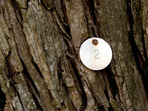 Struttura di legno della corteccia con la tabulazione del metallo Fotografia Stock Libera da Diritti
