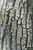 Struttura di legno della corteccia del Brown Fotografie Stock