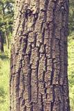Struttura di legno della corteccia del Brown Fotografia Stock Libera da Diritti