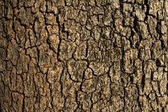 Struttura di legno della corteccia di Brown Immagini Stock Libere da Diritti