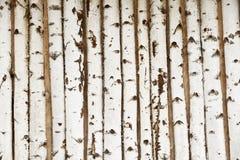 Struttura di legno di betulla Fotografia Stock
